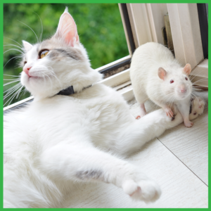 cat and rat together